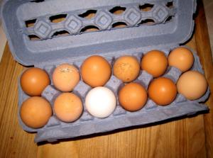 Unbreakable Eggs