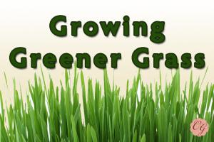 Growing_Greener_Grass