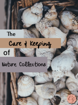 care_keeping_nature_collections