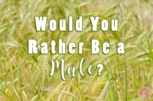 Rather_be_a_Mule?